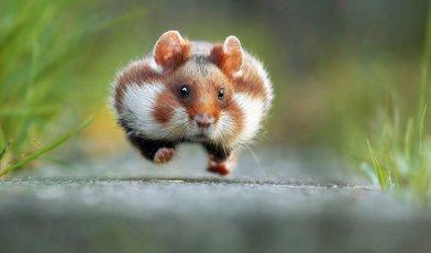 Zmagovalne fotografije divjih živali